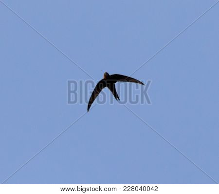 A Bird In The Blue Sky . In The Park In Nature