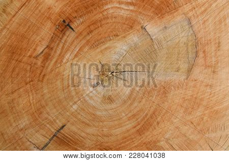 Close-up View Of Tree Rings. Wooden Texture Background.