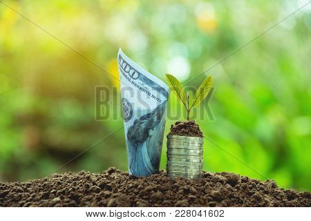 Saving Money Concept With Banknote Growing For Business. Financial And Accounting Concept.