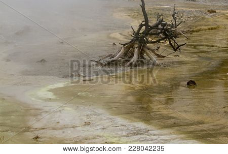 Dead Trees In Boiling Mud At Fountain Paint Pots In Yellowstone National Park