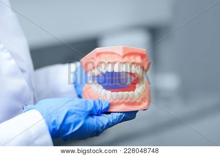 Denture Picture With The Best Focus On Teeth. Dentist Holding Tooth Model During A Presentation. Tee