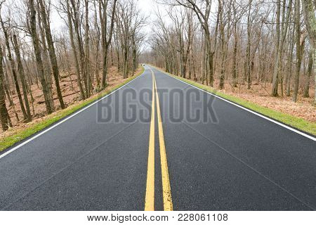 Asphalt road into the winter forest