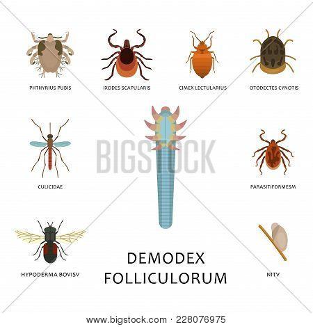 Human Skin Parasites Vector Housing Pests Insects Disease Parasitic Bug Macro Animal Bite Dangerous