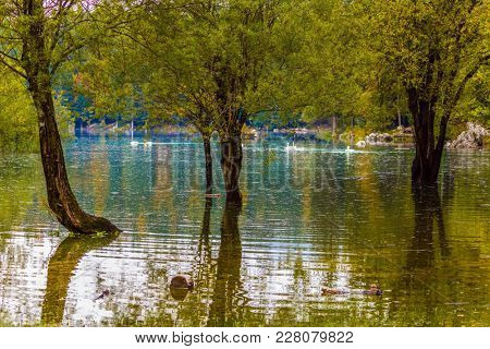 The lake in Northern Italy - Lago de Fusine. Spring Flood. Concept of cultural and ecological tourism. The white swans swims in the water