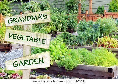 Grandma's vegetable garden. Organic community garden growing vegetables, herbs and fruit.