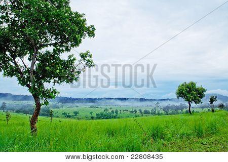Thung Salang Luang