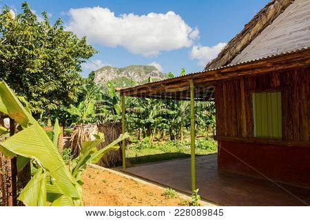 Rural Dwelling In Banana Plantations In The Vinales Valley