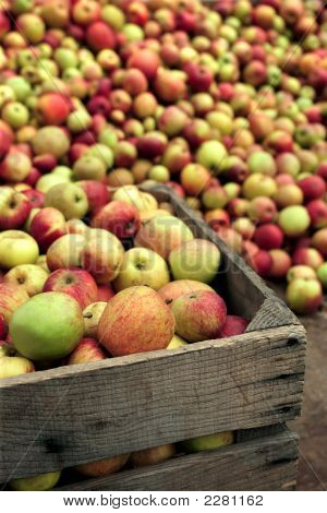Apples For Apple Juice