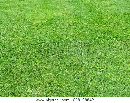 Perfect Striped Lawn Green Fresh Grass Background