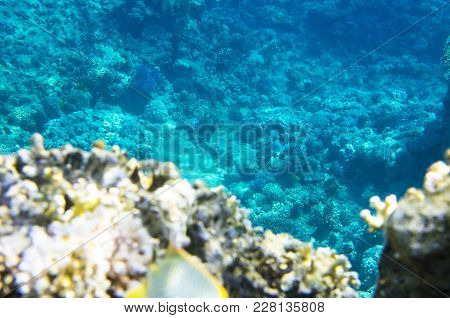 Landscape Of The Seabed With Coral, Underwater,