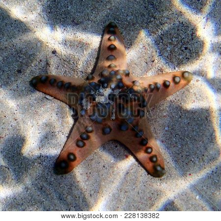 Seastar Close Up In The Sea Of Thailand