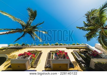 Palm Trees In Beverly Hills On A Sunny Day. Los Angeles, California