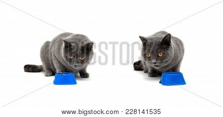Beautiful Gray Cat Sitting Near A Bowl With Food. White Background - Horizontal Photo.