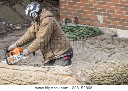Man Wearing Helmet Cutting A Large Tree Trunk With A Chain Saw