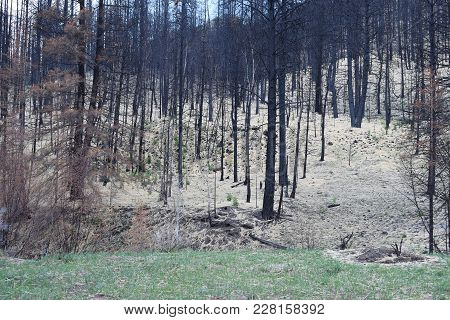 Regrowth In A Meadow Overlooking A Burnt Hillside.