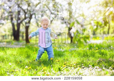 Little Boy Playing In Blooming Cherry Blossom Garden. Child With Spring Flowers In Fruit Orchard. Ea