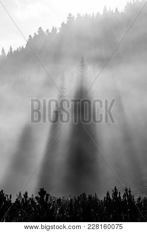 Foggy Morning In The Nature. Sun Beams Light Through Mist With Tree Silhouettes. Black And White Ima