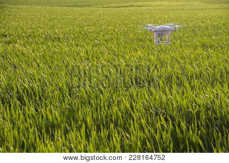 Givat Brenner, Israel - February 24, 2017: Photography Quadcopter Drone Hovering Over Young Green Sp