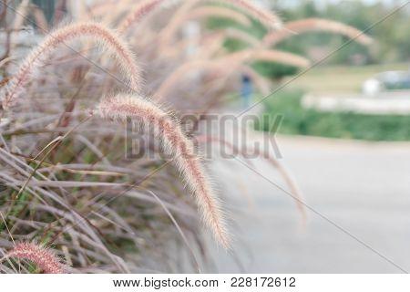 Wild Field Of Grass, Warm Toning, Shallow Dof