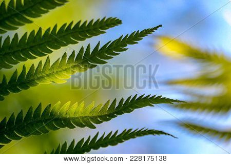 Closeup Of Green Leaves In The Sunlight