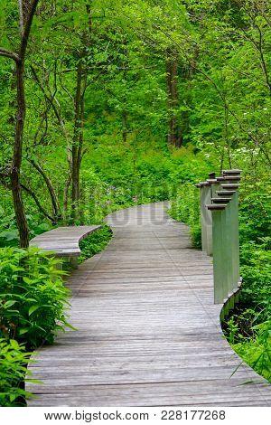 Beautiful Trail At A Wildflower Garden In Summer
