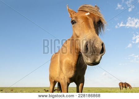 A Funny Picture Of Wild Horses In The Steppe. A Herd Of Wild Horses Shown On Water Island In Atmosph