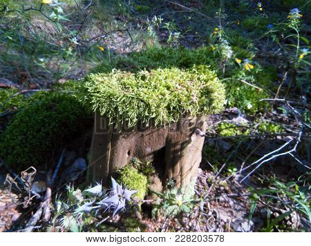 Foto  Stump Of Tree In Forest With Plants