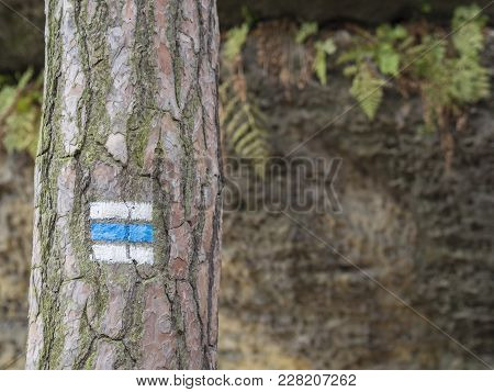 Blue Touristic Mark Trail Sign On Spruce Tree Trunk Forest, Rock And Fern Background, Selective Focu