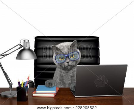 Cat In Glasses Manager Is Doing Some Work On The Computer. Isolated On White Background