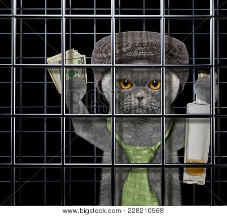 Drunken Cat Is Punishe In Cage Of Prison