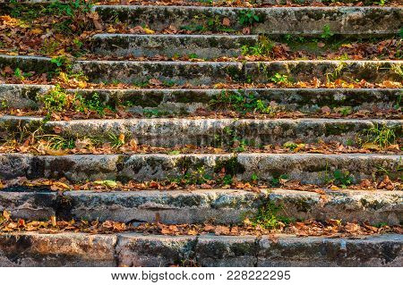 Dilapidated Stone Stairs Covered With Grass And Dry Leaves In Sunny Autumn Day Closeup