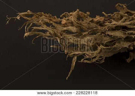 Dried Ramalina Fraxinea Or Cartilage Lichen Closeup Abstract Background
