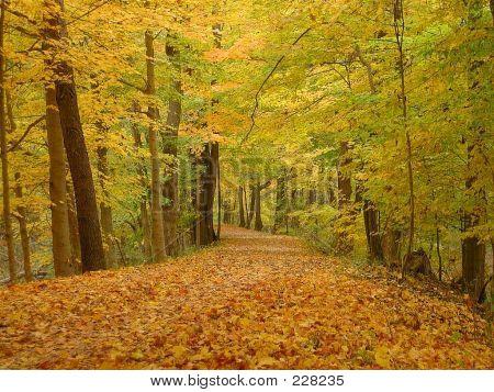 Bike Trail Covered With Fall Leaves