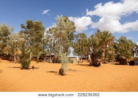 Green Trees In Oasis In The Sahara Desert, Morocco