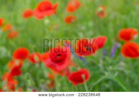Natural Blurry Background - Spring Field With Red Poppies