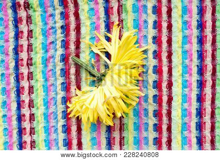 The flower Aster is a genus of flowering plants in the family Asteraceae.