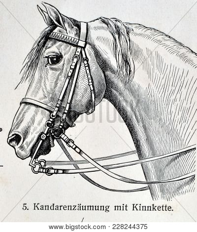 ILLUSTRATIVE EDITORIAL.Vintage illustration - HORSE HARNESS. Meyers Kleines Lexikon. Edition 1908. February 22 2018 in Kiev,Ukraine