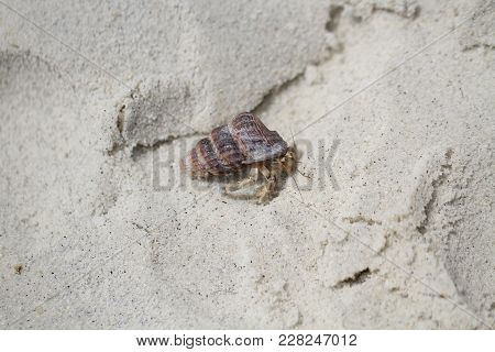 close-up hermit crab on idyllic beach, attractive sealife, backgrounds, wallpaper
