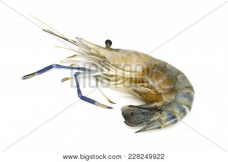 Shrimp With Eggs Isolated, Close Up Of Crustacean On White