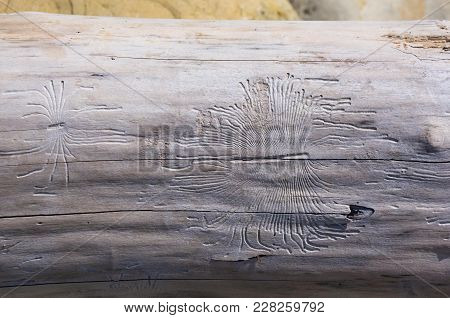 Driftwood, Washed Up By The Sea With Beautiful Lines From The Beetles Woodworm On A Pebble Beach On
