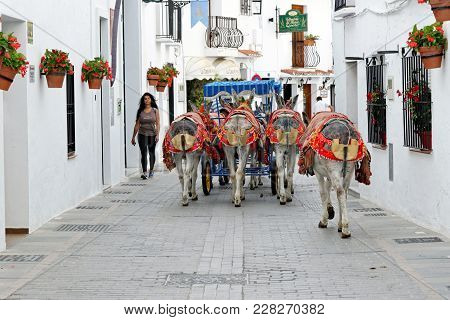 Mijas, Spain - August, 29, 2017: Colorful Decorated Donkeys Famous As Burro-taxi Waiting For Passeng
