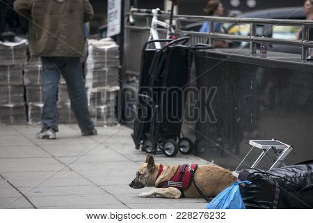 London, England - August 22, 2017 Homeless Left His Dog With A Hat For Money, London,