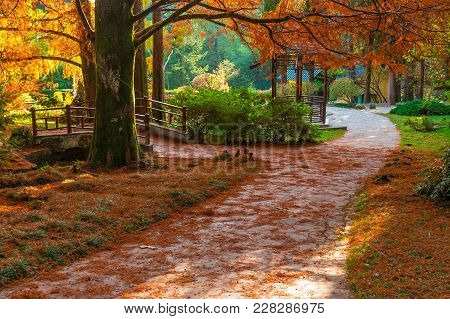 Footpath In The Japanese Garden With Bridge And Arbor In Arboretum In Sunny Autumn Day, Sochi, Russi