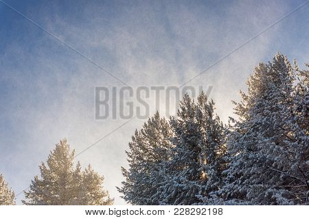 Sun Behind Coniferous Trees And Sunbeams Illuminating Snow Flakes In The Air During Snow Storm In Th