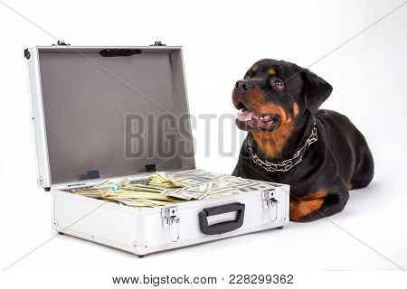 Cute Rottweiler And Suitcase With Currency. Dog Of Breed Rottweiler Lying On White Background Near S