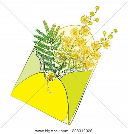 Vector Bouquet With Outline Mimosa Or Acacia Dealbata Or Silver Wattle Flowers And Leaf In Yellow Op