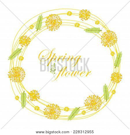 Vector Round Frame With Outline Mimosa Or Acacia Dealbata Or Silver Wattle Yellow Flower And Green L