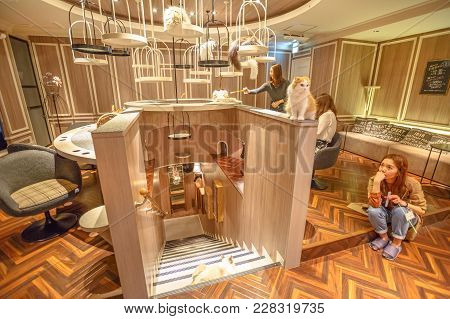 Tokyo, Japan - April 17, 2017: Asian People Playing With A Cute Cats Inside Of Cat Cafe Mocha, Shibu
