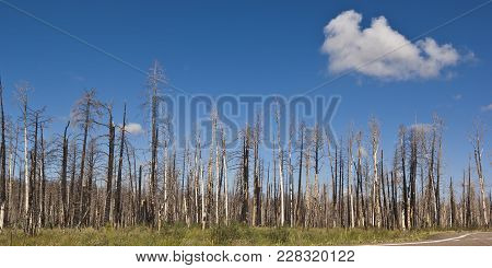 Devastation On The North Rim Of The Grand Canyon