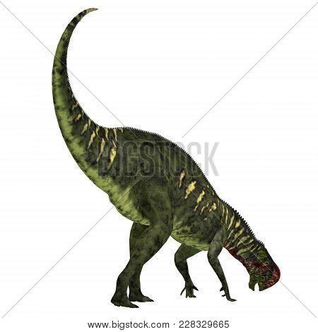 Altirhinus Dinosaur Tail 3d Illustration - Altirhinus Was An Iguanodont Herbivore Dinosaur From The